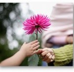 flower handed by a child to a woman